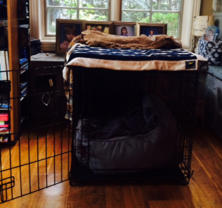 metal dog crate training