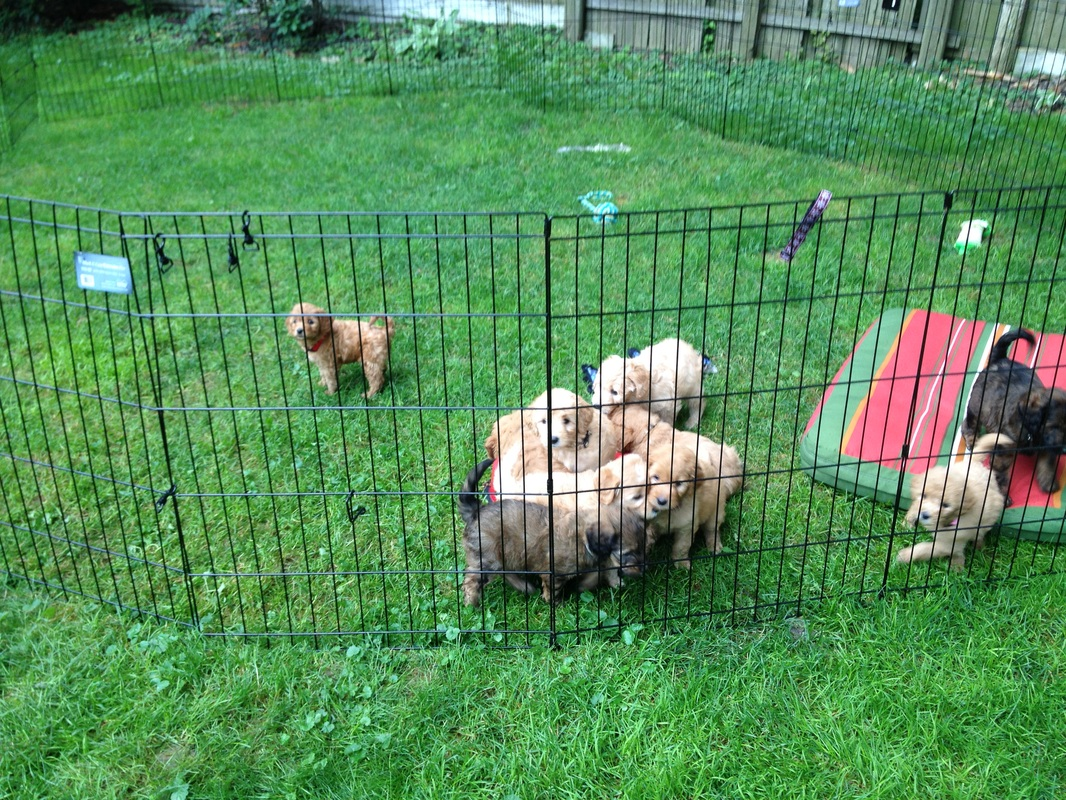 Puppy exercise pen