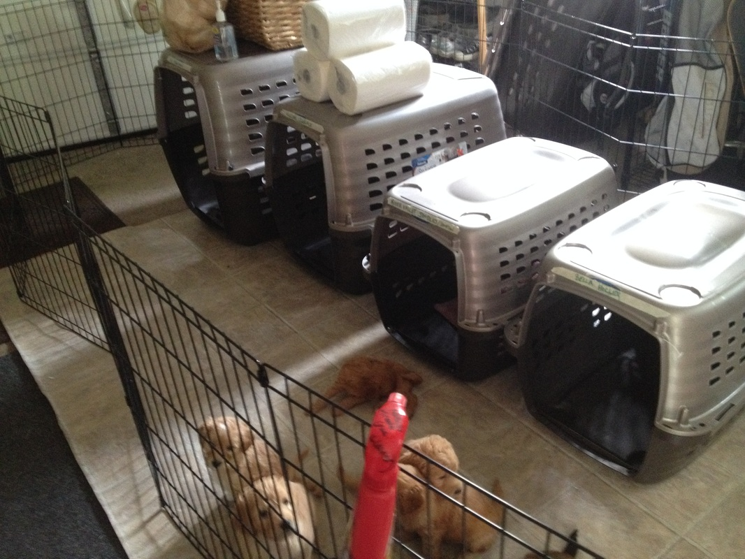 dog crate training how to