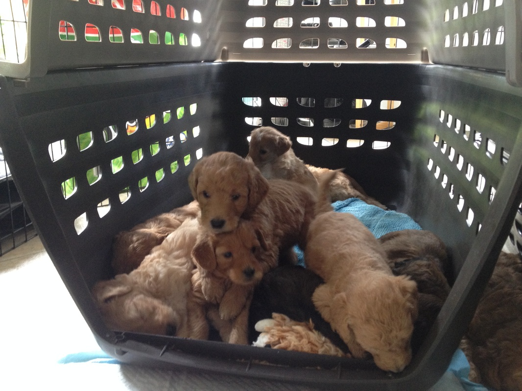 Puppies like crates