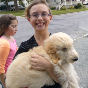 Goldendoodle puppies for sale